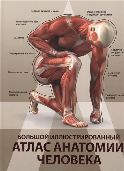 Спектор А. Большой иллюстрированный атлас анатомии человека спектор анна артуровна большой иллюстрированный атлас анатомии человека