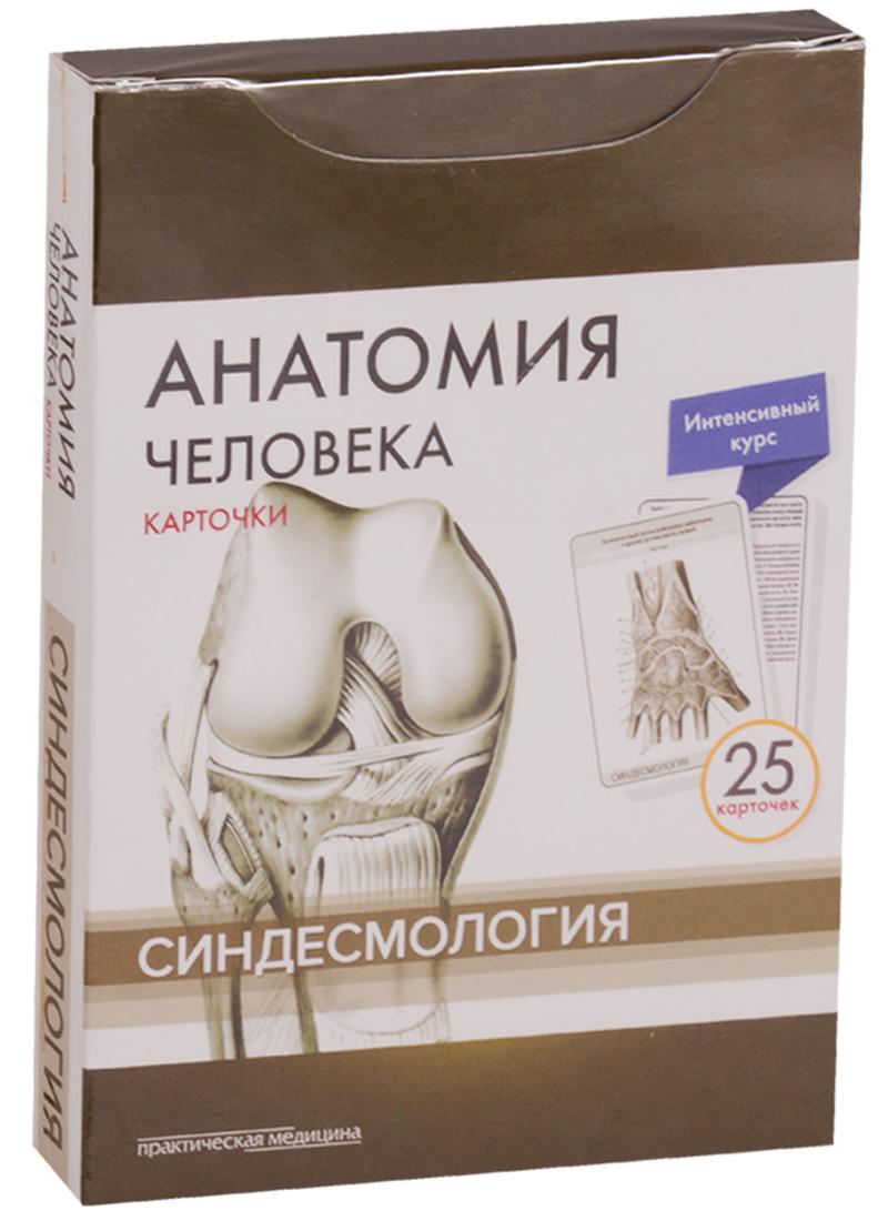 Анатомия человека. Карточки. Синдесмология. Интенсивный курс (25 карточек)