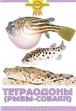 Гуржий А. Тетраодоны а гуржий офисный аквариум