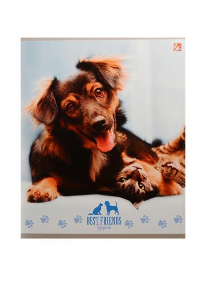 "Тетрадь 48л кл. ""Собаки и кошки"" мел.картон, выб.лак, ассорти, Unnika"