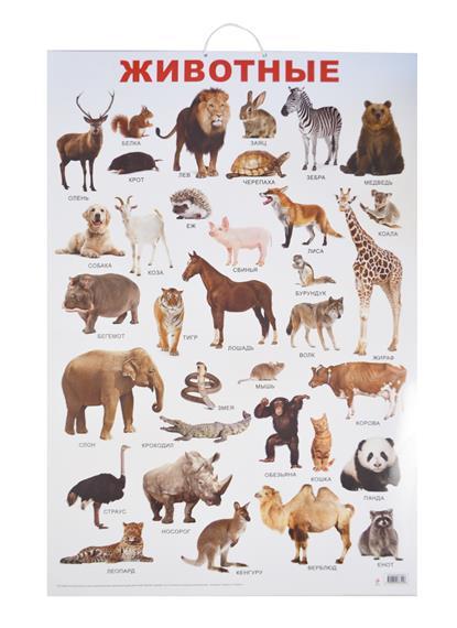 Животные. Учебный плакат. Пособие для развивающего обучения