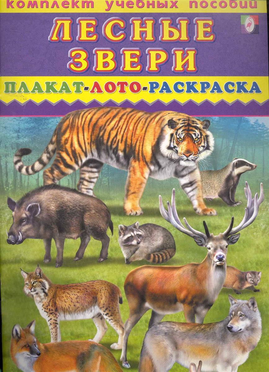 Комплект Лесные звери Плакат лото раскраска