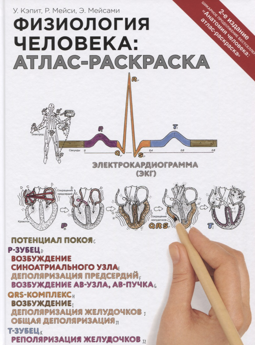 Кэпит У., Мейси Р., Мейсами Э. Физиология человека: атлас-раскраска уинн кэпит анатомия человека атлас раскраска