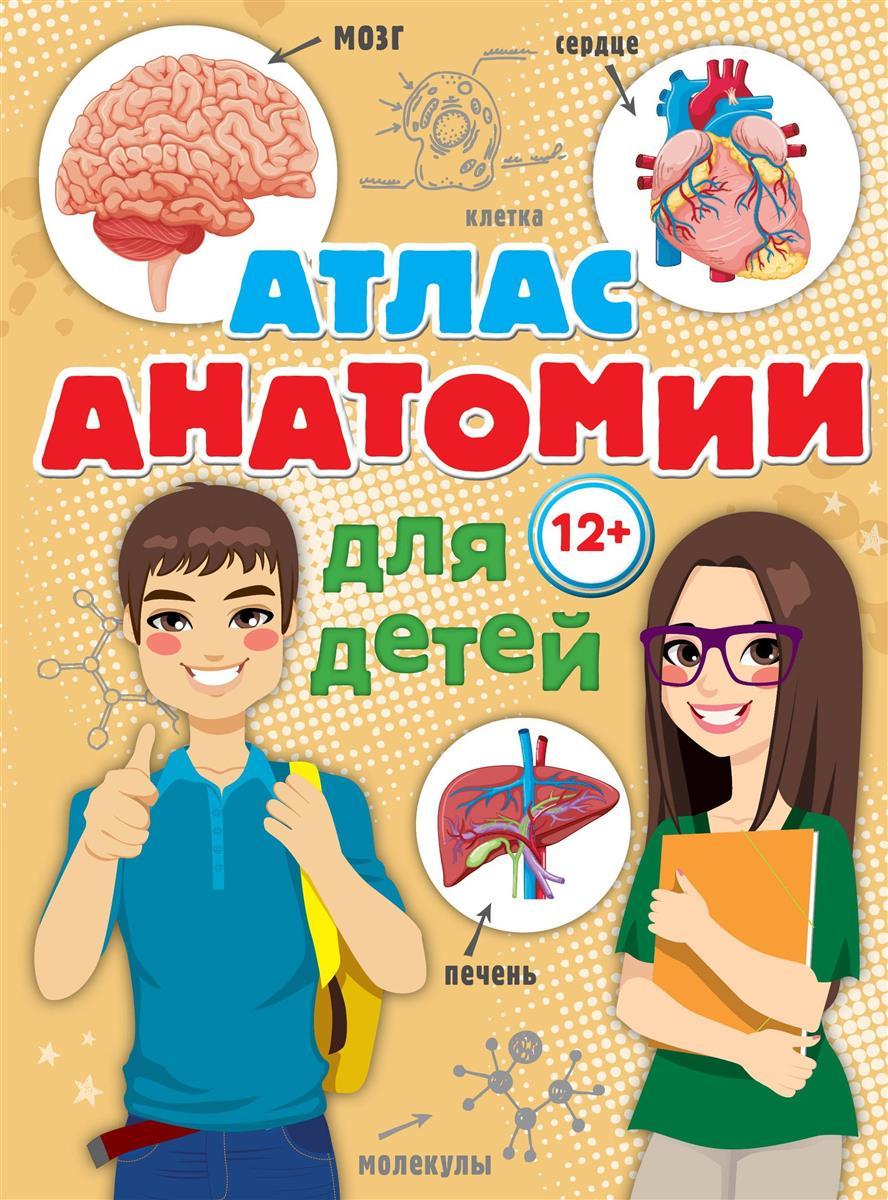 Швырев А. Атлас анатомии для детей ISBN: 9785179826064 анна спектор большой иллюстрированный атлас анатомии человека