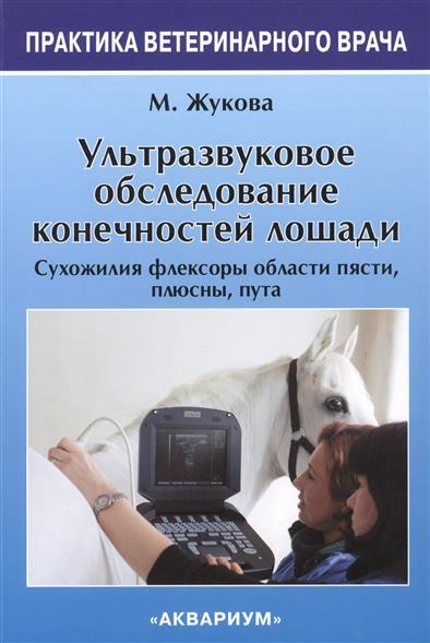 Ультразвуковое обследование конечностей лошади. Сухожилия флексоры области пясти, плюсны, пута