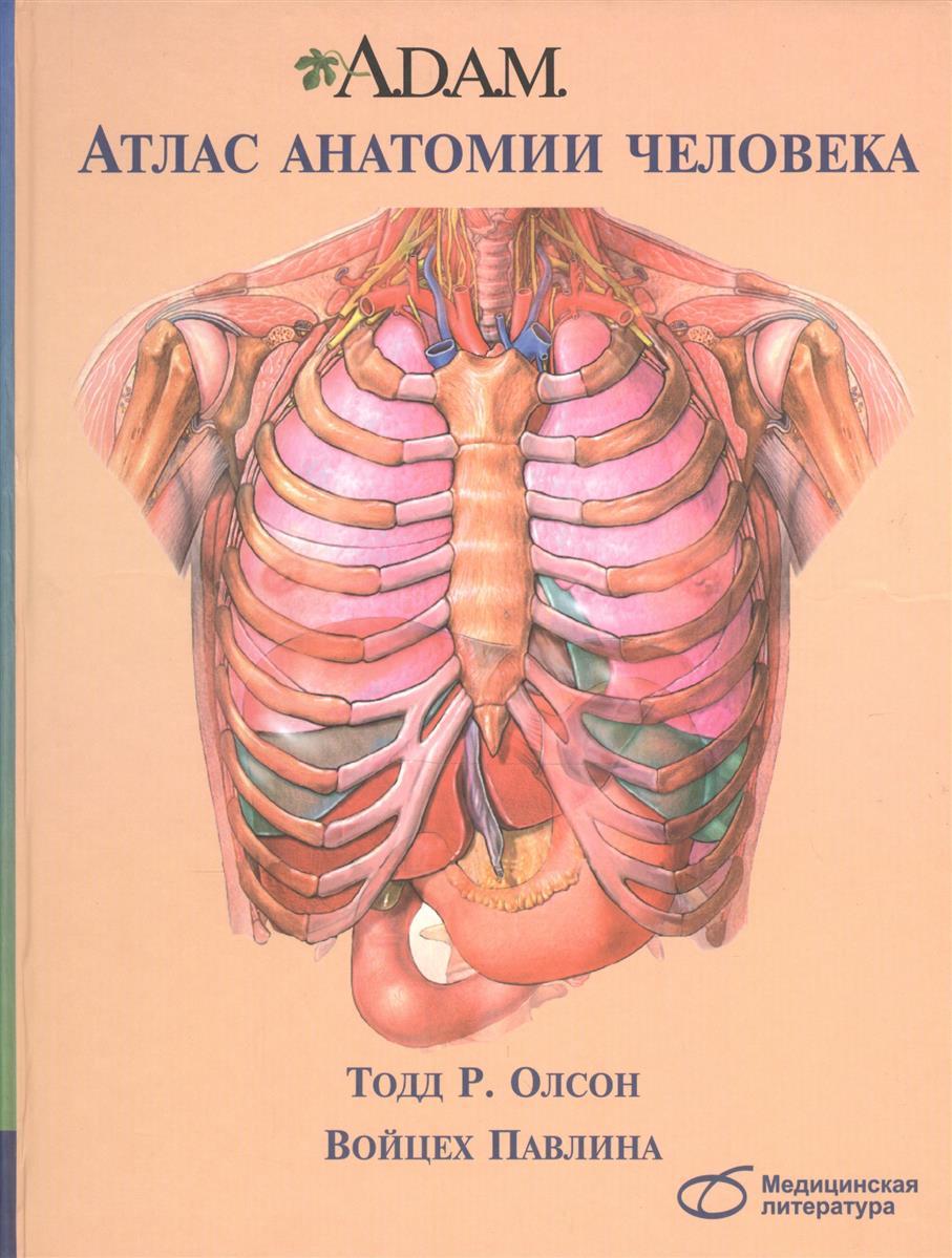 Олсон Т., Павлина В. A.D.A.M. Атлас анатомии человека анна спектор большой иллюстрированный атлас анатомии человека