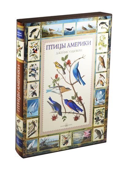 Птицы Америки