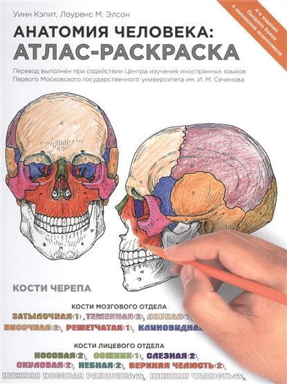 Элсон Л., Кэпит У. Анатомия человека: атлас-раскраска анатомия человека атлас