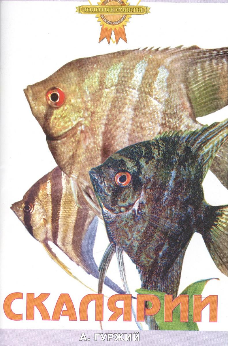 Гуржий А. Скалярии а гуржий офисный аквариум