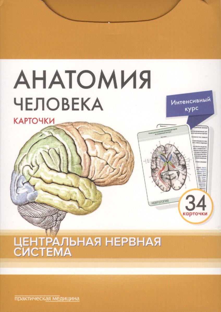 Анатомия человека. Центральная нервная система. 34 карточки