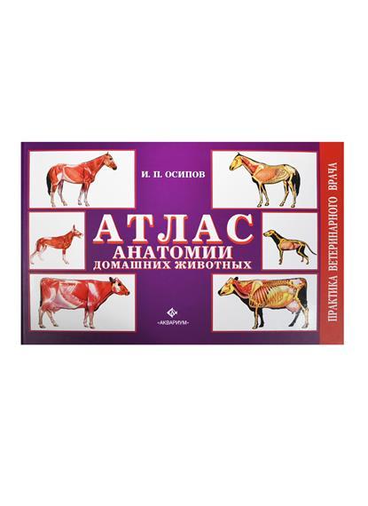 Осипов И. Атлас анатомии домашних животных