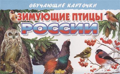 Глушкова Н. (худ.) Обучающие карточки. Зимующие птицы России цена 2016