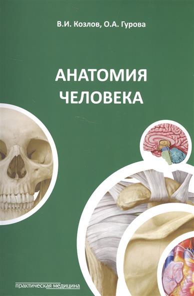 Козлов В., Гурова О. Анатомия человека защита гурова