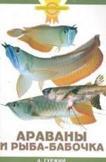 Гуржий А. Араваны и рыба-бабочка а гуржий офисный аквариум