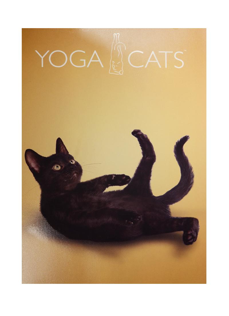 """Тетрадь А4 48л кл. """"Yoga Dogs"""", выб.УФ-лак, кругл.углы, ассорти, Academy Style"""