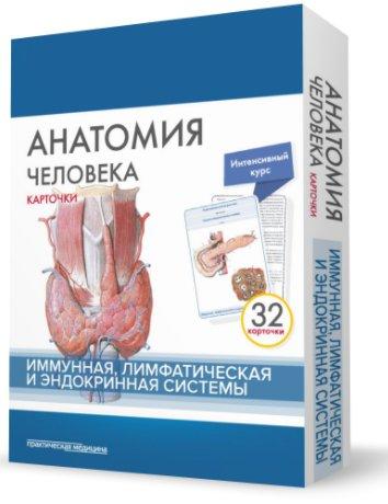 Анатомия человека. Иммунная, лимфатическая и эндокринная система. 32 карточки