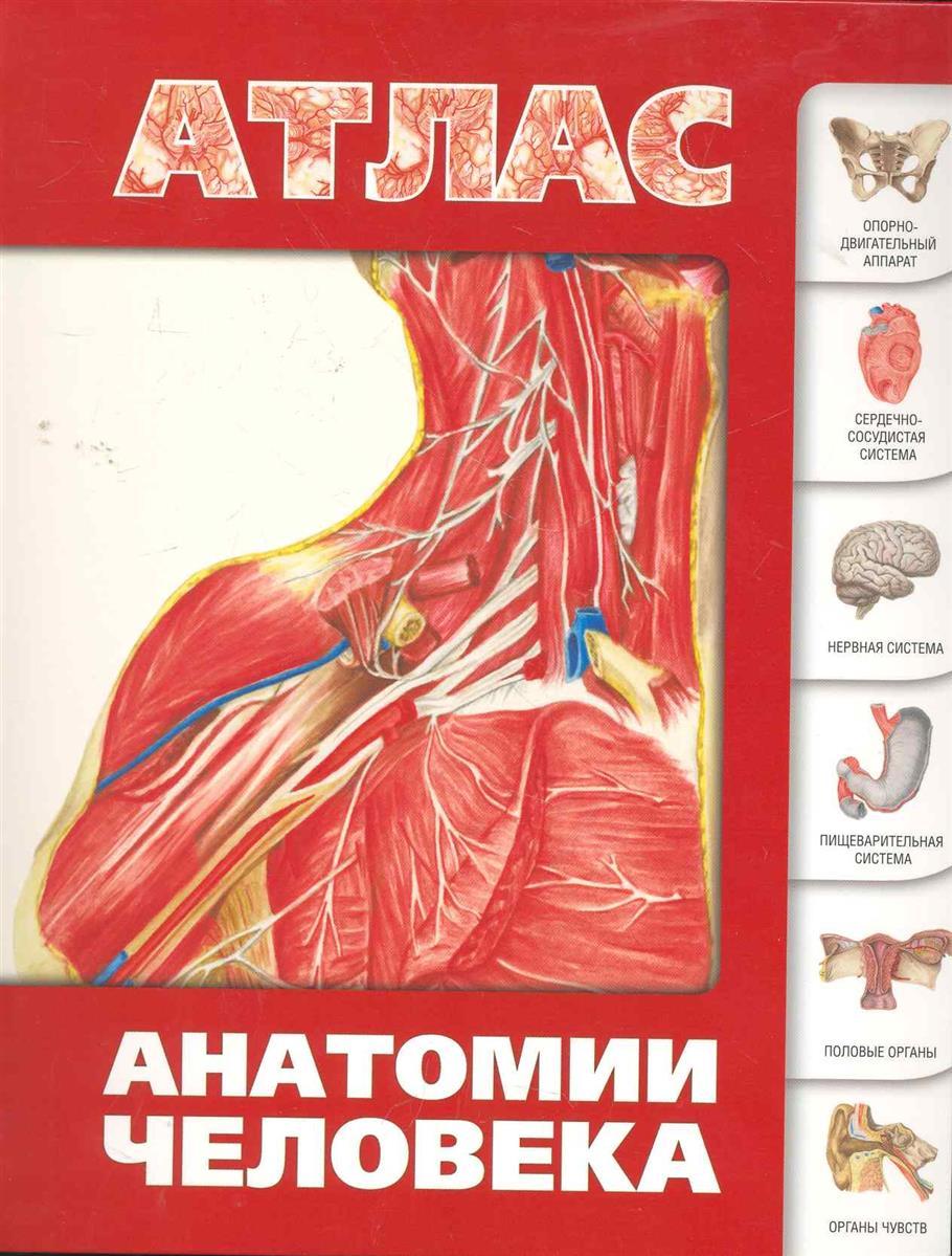 Левкин С. Атлас анатомии человека большой иллюстрированный атлас анатомии человека