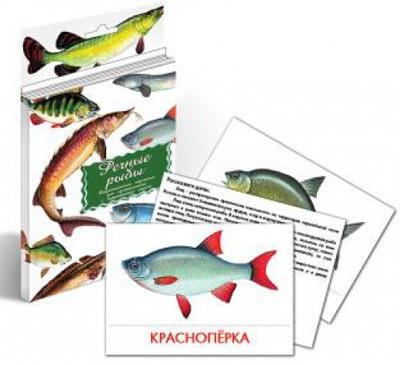 Речные рыбы. Дидактические карточки для ознакомления с окружающим миром речные приключения