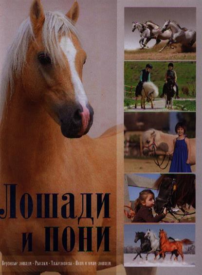 Жабцев В. Лошади и пони