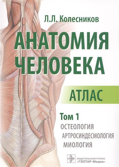 Колесников Л. Анатомия человека. Атлас. В 3 -х томах. Том 1. Остеология. Артросиндесмология. Миология анатомия по пирогову атлас анатомии человека в 3 х томах том 1 верхн конечн ниж конечн cd