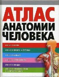 Воробьев В. Атлас анатомии человека анна спектор большой иллюстрированный атлас анатомии человека