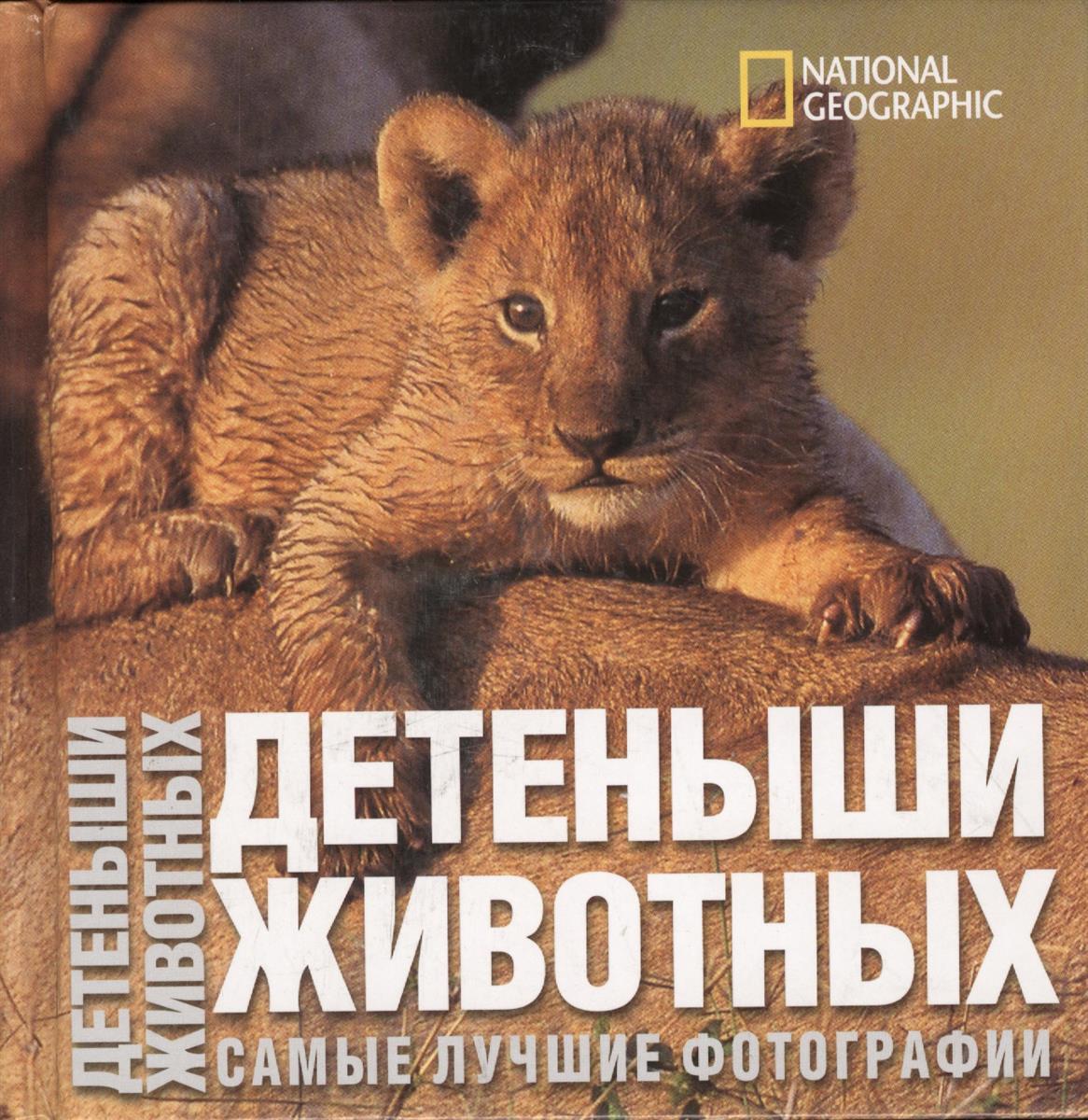 Фото - Ильдос А. Детеныши животных. Самые лучшии фотографии детеныши животных