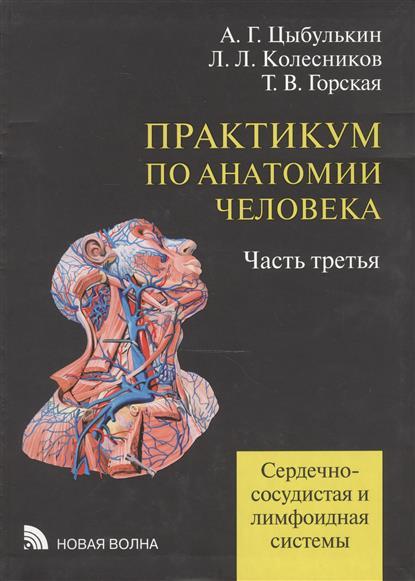 Практикум по анатомии человека: учебное пособие. В четырех частях. Часть третья. Сердечно-сосудистая и лимфоидная системы