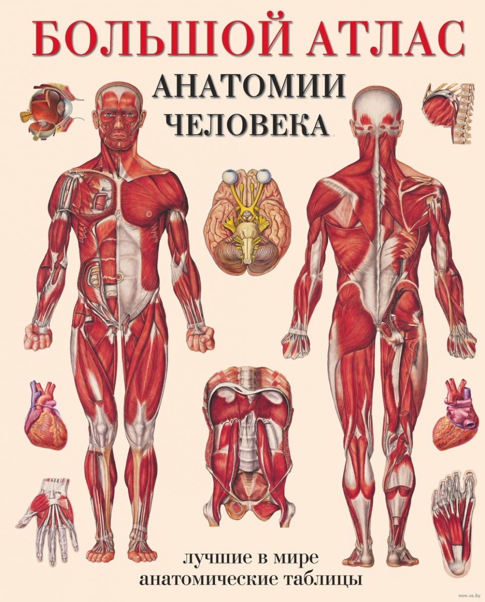 Махиянова Е. (пер.) Большой атлас анатомии человека л н палычева популярный атлас анатомии человека