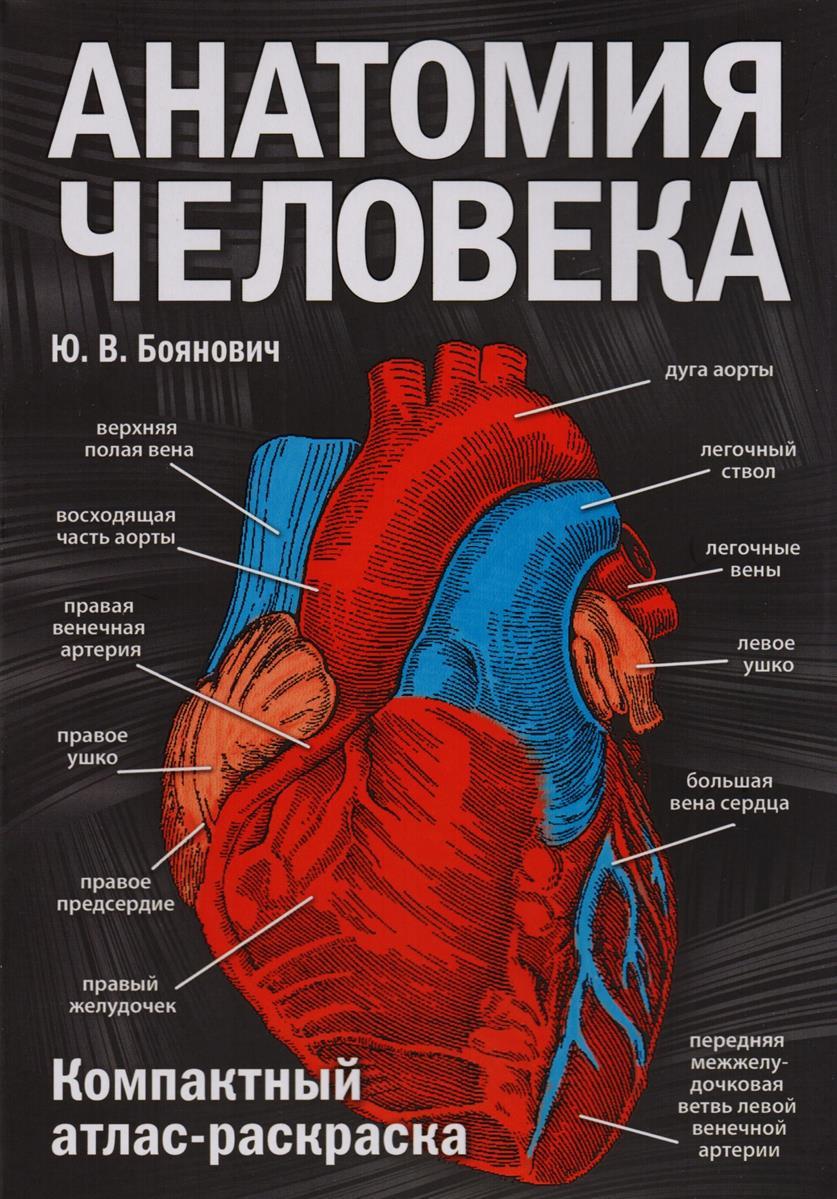 Боянович Ю. Анатомия человека: компактный атлас-раскраска анатомия человека русско латинско английский атлас