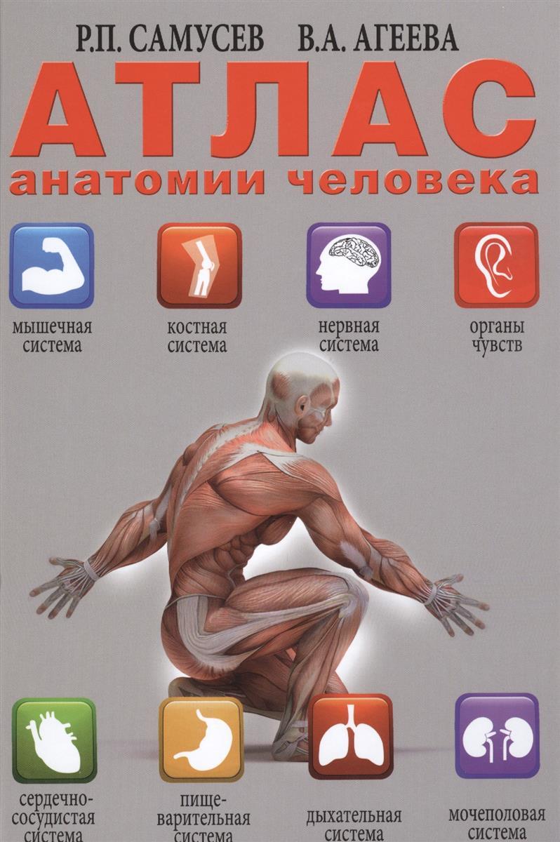 Самусев Р.П., Агеева В.А. Атлас анатомии человека самусев р атлас анатомии человека