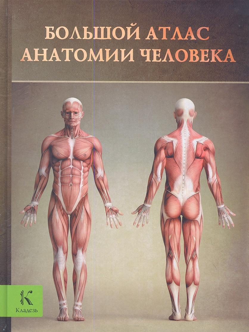Буканова Ю. (пер.) Большой атлас анатомии человека шилкин в филимонов в анатомия по пирогову атлас анатомии человека том 1 верхняя конечность нижняя конечность cd