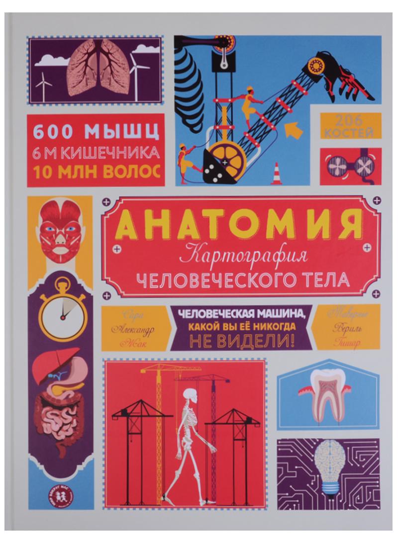 Анатомия Картография человеческого тела