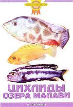Гуржий А. Цихлиды озера Малави а гуржий офисный аквариум