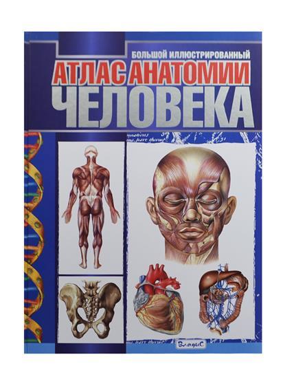Спивак А., Афанасьев С., Феданова Ю. (ред.) Большой иллюстрированный атлас анатомии человека перез в худож большой атлас анатомии человека