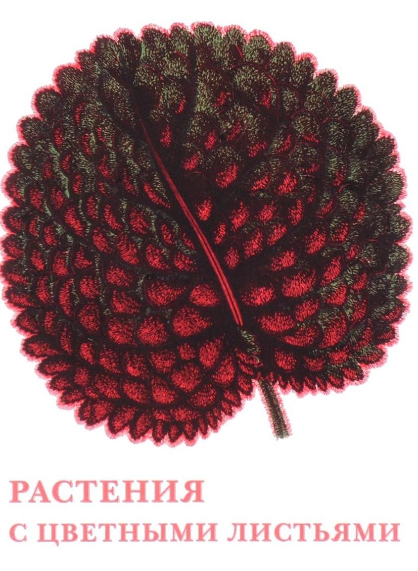 Растения с цветными листьями Набор открыток