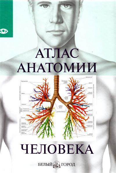 Атлас анатомии человека л н палычева популярный атлас анатомии человека