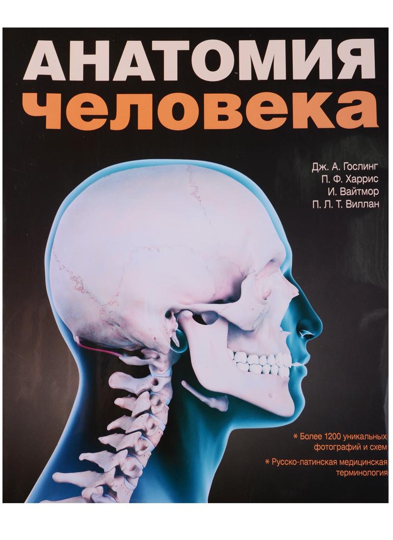 Гослинг Дж., Харрис П., Вайтмор И., Виллан П. Анатомия человека. Цветной атлас и учебник анатомии анатомия человека русско латинско английский атлас