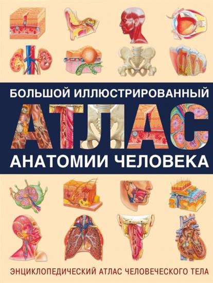 Большой иллюстрированный атлас анатомии человека. Энциклопедический атлас человеческого тела