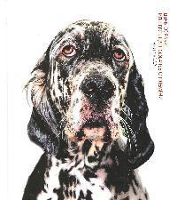 День собаки или Весь цвет собачьего племени