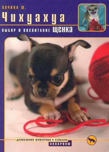 Чихуахуа Выбор и воспитание щенка