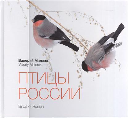 Птицы России. Birds of Russia