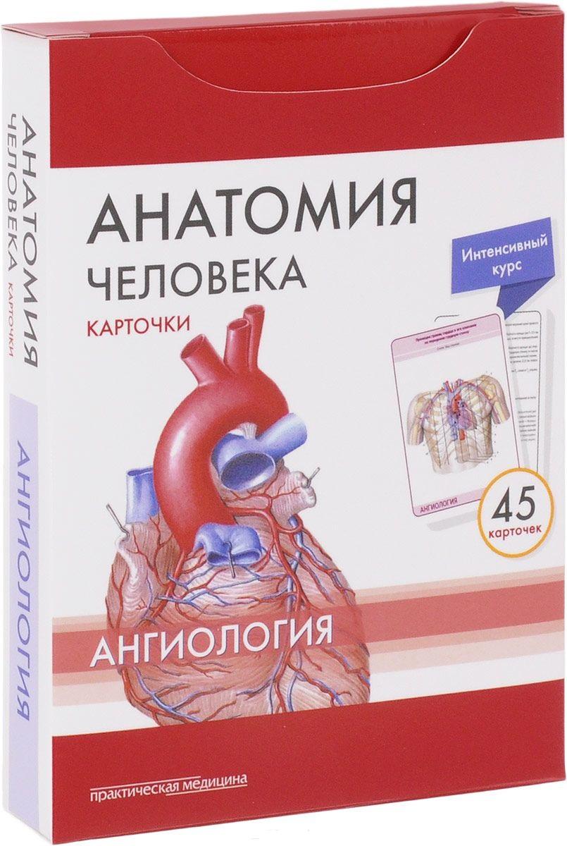 Сапин М., Николенко В., Тимофеева М. Анатомия человека. Ангиология. 45 карточек анатомия человека русско латинский атлас
