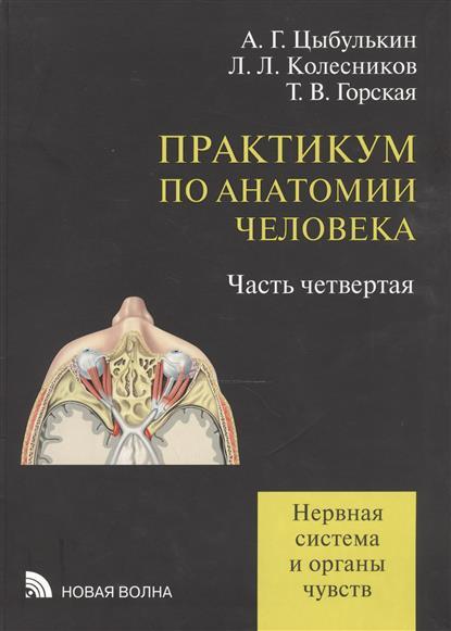 Практикум по анатомии человека: учебное пособие. В четырех частях. Часть четвертая. Нервная система и органы чувств