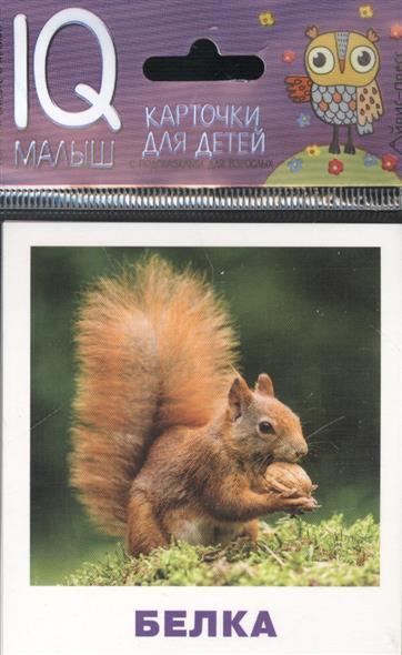Кто живет в лесу? Карточки для детей с подсказками для взрослых